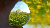 DSC_0216 (Kleinehobbyfotografie) Tags: fotonature ball crystalball crystal wild raps wildraps blumen nature natur naturfotos naturfoto blüte glaskugel glas glaskugelfoto fotoglaskugel fotomitglaskugel