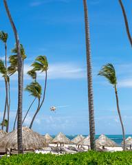 _U7A0171 (Eric.Burniche) Tags: dominican dominicanrepublic caribbean beach palmtree ocean water sand vacation island