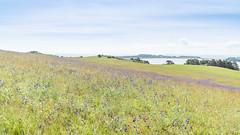 Wildblumenwiese (jkiter) Tags: wiese deutschland rügen landschaft küste gewässer meer ostsee natur überbelichtet balticsea germany landscape nature outdoor coast overexposed sea waters