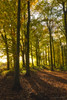 Remembering 2007 (shawn~white) Tags: shawnwhite autumn beauty beech bliss deciduous dreamy enchanting fall forest hardwood hope leaves path peaceful restful restorative softlight spiritual tree warmth wood woodland woods urchfont england unitedkingdom gb wiltshire oakfirth