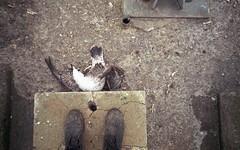 (jonesrachel920) Tags: 35mm film negative scan 2017 new york state fuji lake ontario outdoors pier rainy mist seagull dead animal