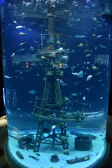 Wonders of Wildlfie National Museum and Aquarium (Adventurer Dustin Holmes) Tags: 2018 wondersofwildlife aquarium shipsmast mast shipwreckroom saltwateraquarium cylinder