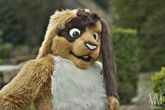 _DSC0025 (MM Furry Photo) Tags: bunny rabbit fursuit fursuiting portrait critterfactory pantoffel