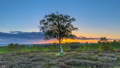 Spring Greens (nicklucas2) Tags: landscape newforest rockfordcommon sun sunrise heather gorse flare