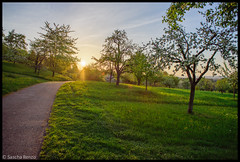 Way to paradise (Sascha Renzo) Tags: light way paradise sunrise sun morning perfect nature landscape green