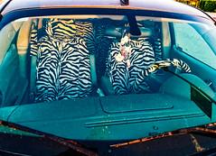 IT'S A JUNGLE OUT THERE (akahawkeyefan) Tags: car steeringwheel davemeyer seats zebra stripes windshield pimpedout