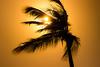 Palm & Sunrays (Beppe Rijs) Tags: africa afrka insel island sansibar tansania tanzania afrika landschaft sonne sunlight landscape light sunrays view baum tree sonnenuntergang sundown himmel sky fineart orange silhouette mood stimmung solitude