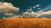Tuscan hill (Enrico Cusinatti) Tags: toscana albero artwork clouds cielo cloud enricocusinatti goldenhour italy italia landscape minimalismo nuvole nature natura nuvola oradorata sky travel tuscany viaggi vacation vegetazione