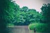 Ratargul swamp forest (Tafser) Tags: dhaka ratargul sylhet nature forest
