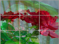 A Gift For You (soniaadammurray - On & Off) Tags: digitalphotography manipulated experimental collage abstract flowers roses artchallenge artweekgallerygroup winterspringroses