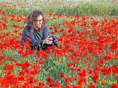 Campo de Amapolas   (19) (eb3alfmiguel) Tags: campos rojo amapolas