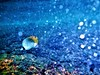 Bubbles (thomasgorman1) Tags: fish sea ocean reef coral bubbles colors hawaii island snorkeling nature butyterfly blue colorized fujifilm finepix