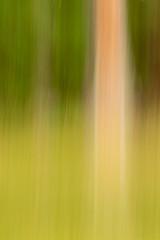 20180508_9701_7D2-150 Forest Blur (johnstewartnz) Tags: 70200mm 70200 70200f28 green hanmer canon canonapsc apsc eos 7d2 7dmarkii 7d canoneos7dmkii canoneos7dmarkii icm intentionalcameramovement 100canon