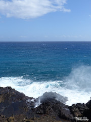 Hawaii_2017_0816 (Christen Ann Photography) Tags: 2017 bustourwithosricchau halonablowhole hawaii hawaii2017 hawaiicon holidays november2017 ohau usa