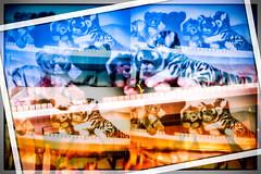 Fluktuierende Freunde (wolfiwolf) Tags: wolfiwolf wolfiart wolfi wolf wolfiwolfy wolfskunst katzen katzenartige art artig artistich fluktuierend fluktuation cats multi meinneuesbildlen multiversum my blue blau bleu bluenote ihaanblue butler zweibutler ichhabezweibutler kunsti kämmerer wund aber bildlen blu bedeutung überirdisch stube creation dassein eneamaemü elysium derexplorierendste farkas fullmoon frei genie gold hismastersvoice ich jazzinbaggies jazz lichtkomposition miuniversummultiversender mehrfachbelichting ung neu neumond offenbaren puttlerseht quantensuppe quantensymphonie quantentheorie resonanz sein tanz universum unendlichkeit universe unding vollmond existenz sky zen anonym klavier klaviaturdeslebens