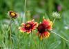 Touch of nature #1 (Nikolaos Gavrilakis) Tags: gavrilakis nikon d750 tamron 70300 flower diomidios διομήδιοσ λουλούδι νίκοσγαβριλάκησ