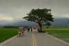 Un samedi après-midi dans les rizières (2) (8pl) Tags: cycles rizières vert cielbouché taïwan chishang campagne champs arbre verdure vélo promenade tourisme passants promeneurs cyclistes habitants touristes