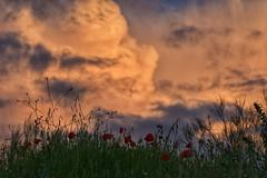 Dejė de pensar en el bien y en el mal cuando entendí que pensar demasiado produce consecuencias adversas. Mientras que vivir lo que sientes te acerca a la felicidad. (elena m.d.) Tags: storm tormenta sunset sky clouds guadaljara paisje landscape nikon d5600 sigma105