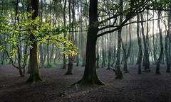 Sunlight (PentlandPirate of the North) Tags: breretonheath congleton cheshire trees light beam ~flickrinnes flickrinnes
