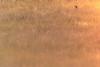 Coin-Coin (Missy Karine) Tags: ngc abigfave champ canard wild nature picoftheday canon duck oiseau volatile anatinae expositionnaturelle