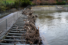 20180513-13-Storm damage after rivulet flood of 2018 (Roger T Wong) Tags: 2018 australia hobart rogertwong sel2470z sony2470 sonya7iii sonyalpha7iii sonyfe2470mmf4zaosscarlzeissvariotessart sonyilce7m3 tasmania damage flood rivulet water