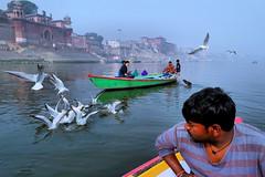 A Morning in Varanasi (pallab seth) Tags: people culture tradition indian life varanasi benaras india banaras boatman gull morning riverganges