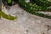 Hail (ruimc77) Tags: nikon d700 sigma 105mm f28 os ex dg hsm macro 11 granizo hail mexico city ciudad méxico cdmx df nature naturaleza natureza ice gelo hielo