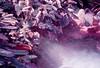 Garden Mist (Hayden_Williams) Tags: leaf leaves purple violet indigo lavender surreal lomography lomo lomochromepurplexr100400 lomographypurplexr100400