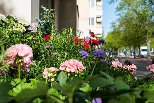 Street - Flowers in my garden