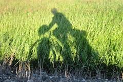 My Shadow Biking Pease Bottom Road (jimarx) Tags: jimarx bicyclerideacrossamerica theyellowstonetrail bikeride americana shadow peasebottomroad custer montana biking