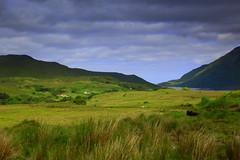 Ireland (annalisabianchetti) Tags: ireland irlanda connemara verde green fields prati bucolic travel paesaggio landscape mountains montagne europa