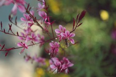 (AmeliaFer) Tags: marbella garden flower canon70d spain canoneos photo photography lover vintage like