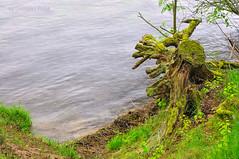 Old trunk and water (Grzesiek.) Tags: korzeń pień trunk water morze