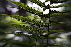 O vento (Daniela Romanesi) Tags: 1971 lensbaby sweet35 leaf folhas verde garden floresta forest jardim leaves folhagem movimento ondas nature natural natureza wind vento brisa