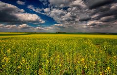 IMG_1720 (radomirmor) Tags: mbpictures landscape sky cloud field hdr 6d canon řepka czech europe