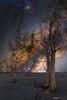 Milky Way and the Trees (tony.liu.photography) Tags: milkyway salt lake trees night sky astro astrophotography western australia stars 50mm 14mm canon 5d4