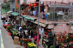 Flower Market (Terry Hassan) Tags: hongkong 香港 plants flower flowers street market mongkok 金魚街