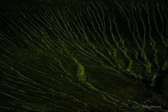 Við Veiðivötn (jon_agust) Tags: veiðivötn iceland europe sand black vegetation green water channel rás rásir vatn vatnsrásir