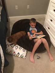 Sophie's Petey helping his brother with his homework!