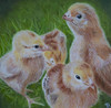Chicks (Kristy912) Tags: cpmchallenge colored pencil drawing
