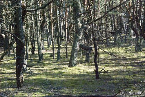 Волинський ліс InterNetri Ukraine 1979973508