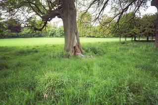 135/365  - the hunt for the fairy folk