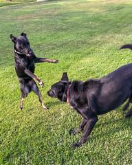 Julian & Nova (beltz6) Tags: goleta california dog dogs puppy puppies