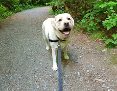 """Gracie happy on the trail • <a style=""""font-size:0.8em;"""" href=""""http://www.flickr.com/photos/14904436@N00/28374665028/"""" target=""""_blank"""">View on Flickr</a>"""