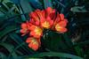 GDM_1025.jpg (GDMetzler) Tags: garden chicagobotanicalgaden spring flowers d500 nikon tamron gdmetzler illinois greenhouse
