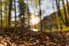 Blümchen mit dem Weitwinkel (louhma) Tags: sigma art 20 14 ww weitwinkel sunrise flower buschwindröschen wald trees waldboden sylvenstein bokeh