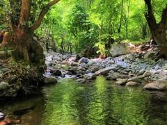 Green soul's reflections_IMG_9346d (AchillWandering) Tags: pom πομ river green canyon euobea evia island reflections water tree keramitzis dream emerald naturephotography rocks