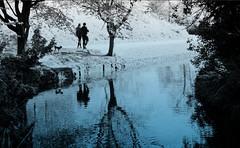 Park Life (ronramstew) Tags: spring liverpool merseyside uk seftonpark lake people dog reflection