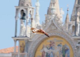 Italian Bird