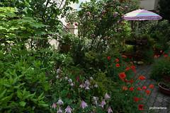 1-DSC_8418  in my personal jungle , my garden (profmarilena) Tags: profmarilena mygarden
